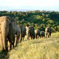 Zonnepanelen voor de olifanten